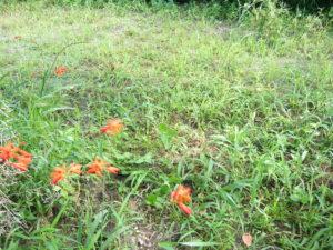 草ボーボーの畑